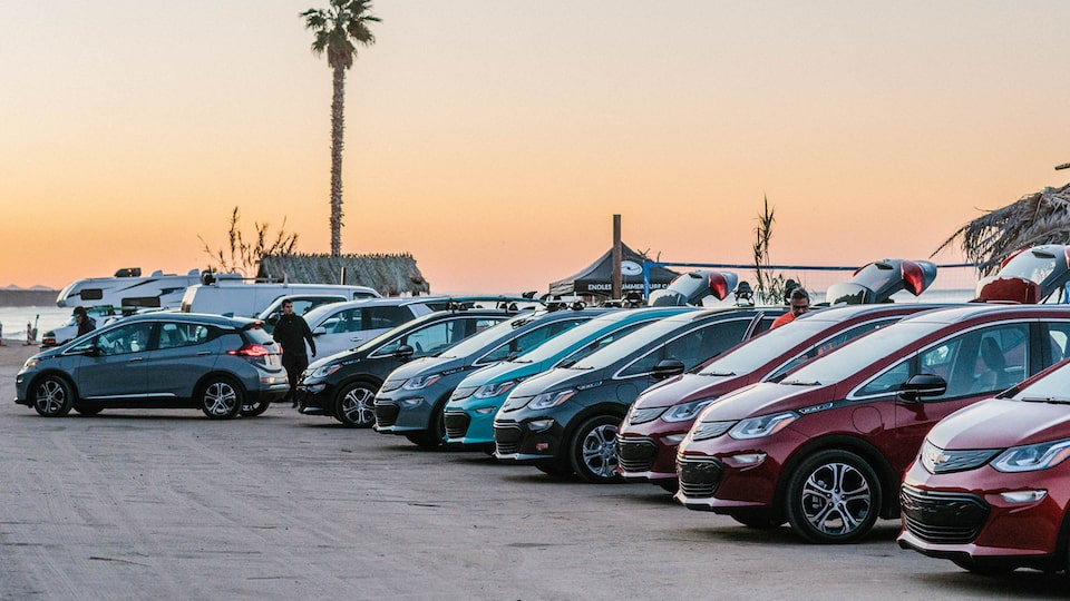 A line of Bolt EVs in a beach parking lot with a single palm tree in the background.