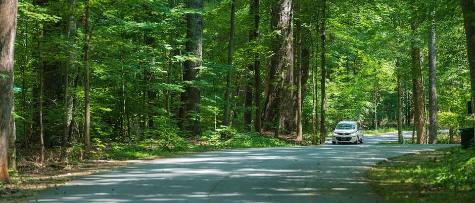 A white Bolt EV drives along a road in the middle of a sun-dappled forest.
