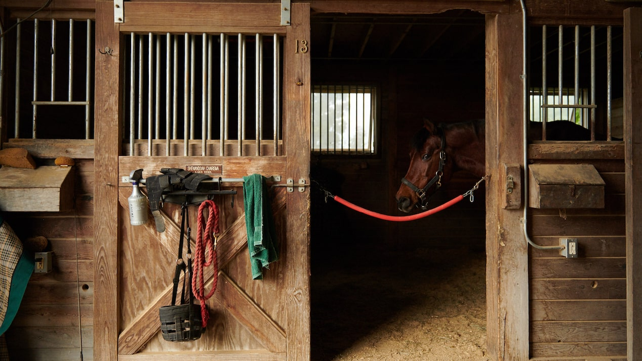 A brown horse looks out of an open stall door in a stable with wooden walls.