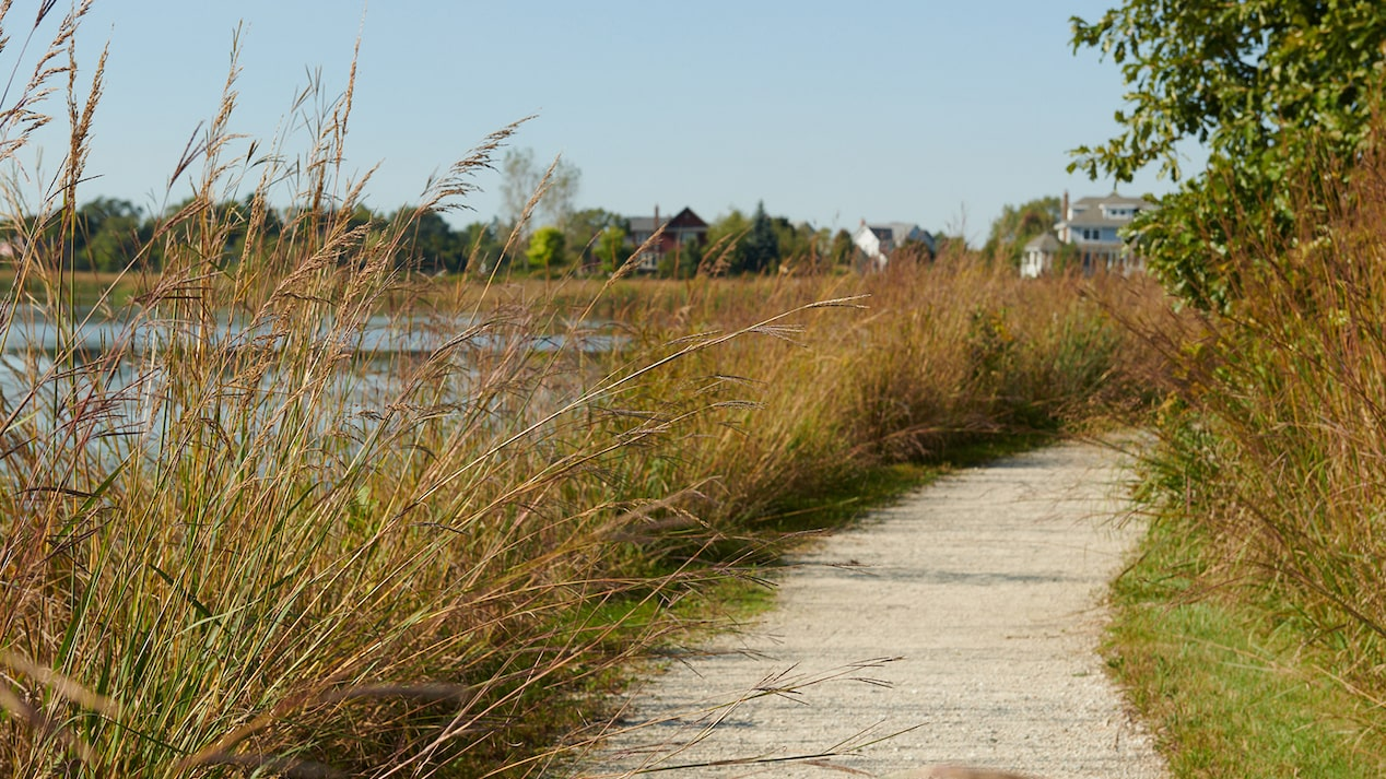 A paved pathway next to a wetlands area.