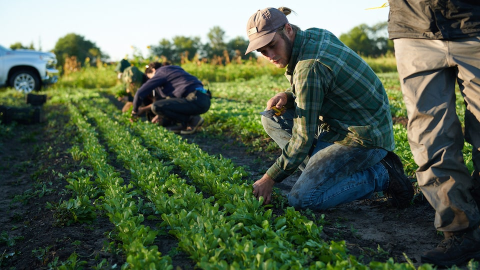 A row of farmers kneeling and tending to crops in a field with a 2019 Chevy Silverado in the background.