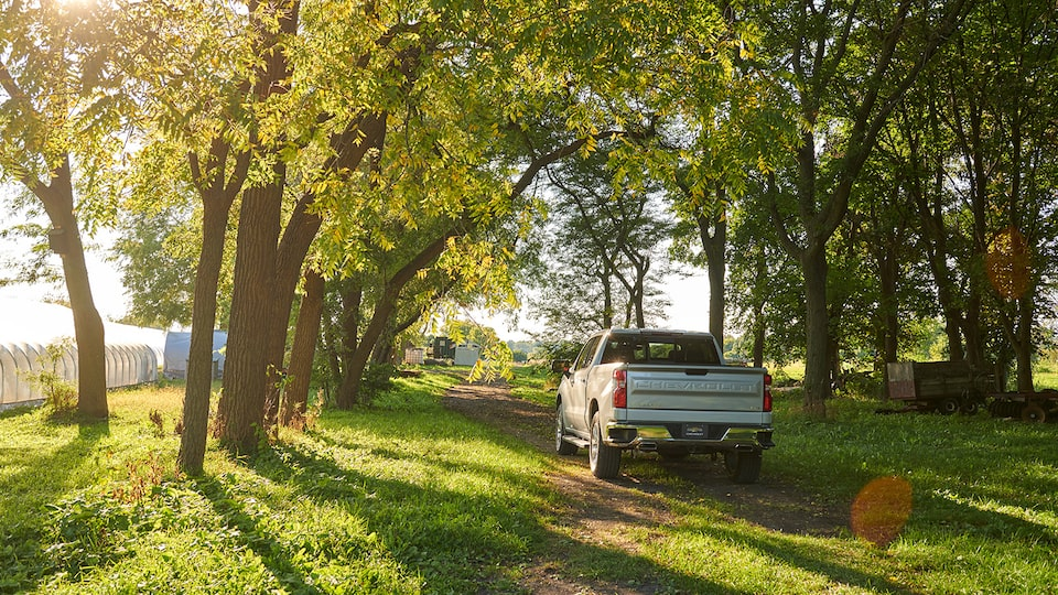The rear of a 2019 Chevy Silverado drives under a tree canopy on a two-track dirt road.