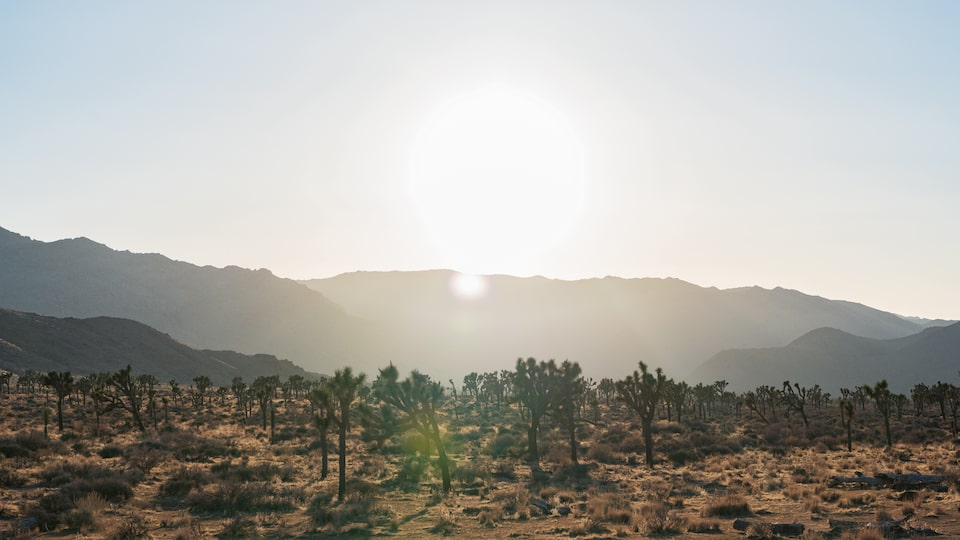 The sun sits low on the horizon behind a desert expanse.